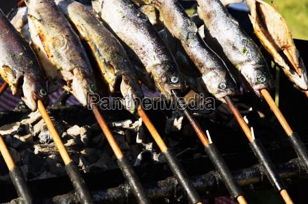 troelle auf dem grill trout festival