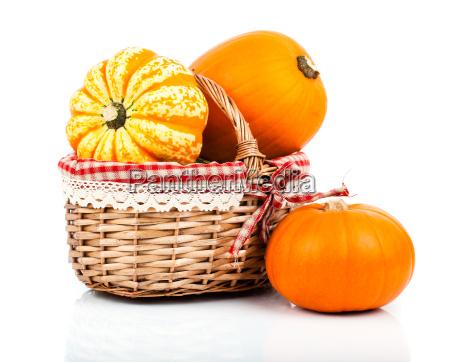 pumpkin white background