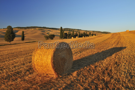 hay bale province of siena tuscany