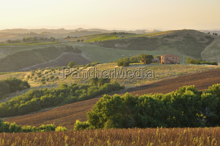 tuscany countryside in the summer montalcino
