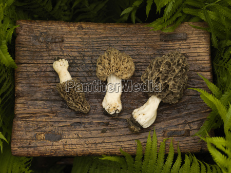 wild mushrooms on wooden stool with