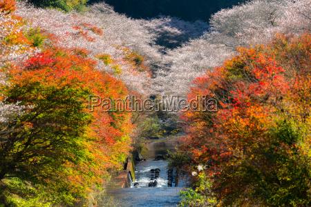 nagoya obara sakura im herbst