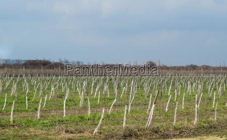 blatt baumblatt landwirtschaftlich baum garten winter