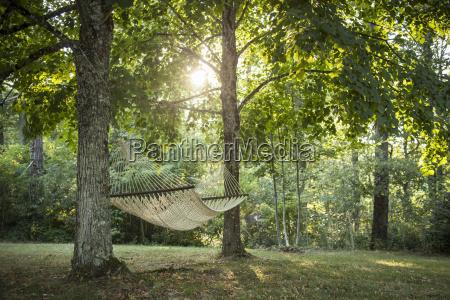 entspannung baum sonnenlicht outdoor freiluft freiluftaktivitaet