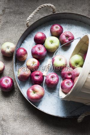 aepfel auf tablett draufsicht