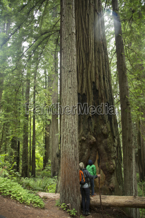 father and son in redwoods national