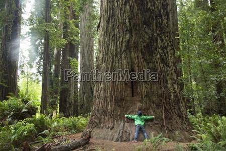 boy hugging tree trunk redwoods national