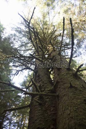 low angle of tree umpqua state