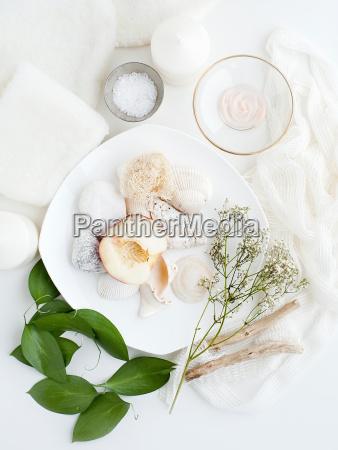 platte mit muscheln pflanzen und blaettern