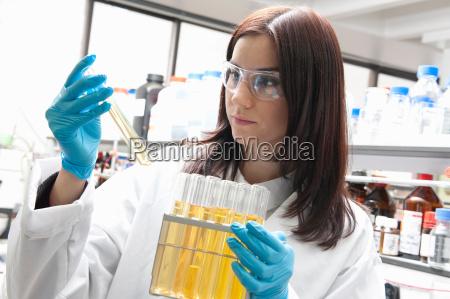 laboratory scientist looking at sample in