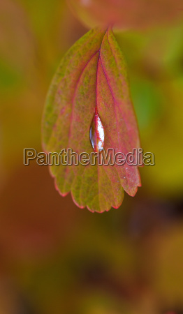 water droplet on autumn leaf