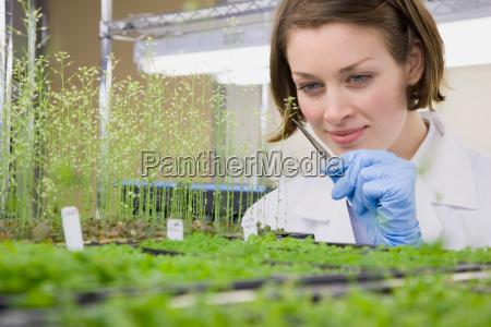 wissenschaftler nehmen pflanzen zum experiment