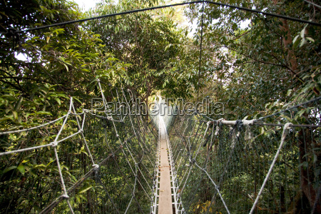 canopy walkway through the forest at
