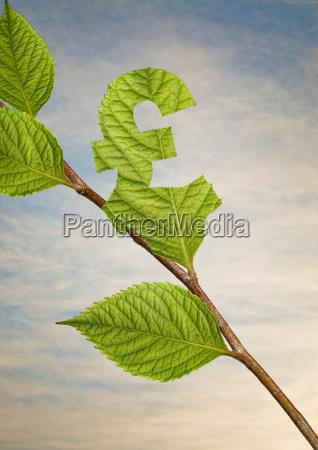 leaf cut into pound sign