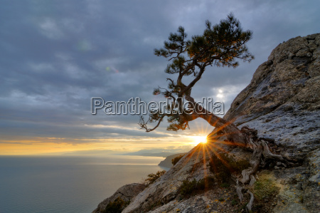 tree growing from rock by black