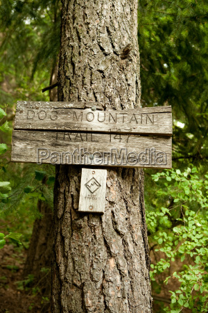 wooden sign on tree trunk