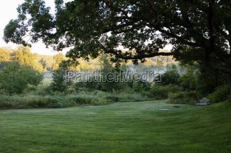 grassy field with tree swing