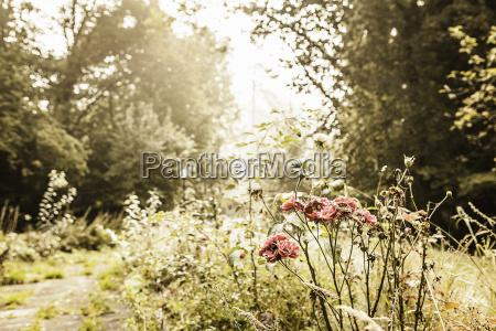 baum garten vertraeumt sonnenlicht outdoor freiluft