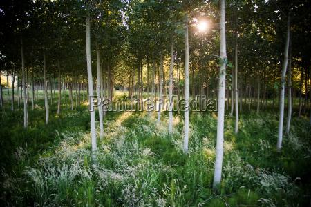 baum sonnenlicht outdoor freiluft freiluftaktivitaet im