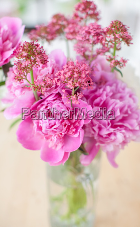 rosa pfingstrosen in vase