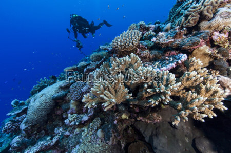 underwater photographer photographing coral reef at