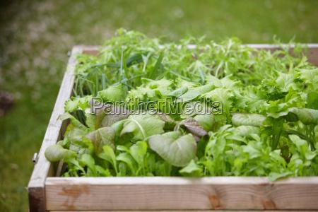 essen nahrungsmittel lebensmittel nahrung garten outdoor