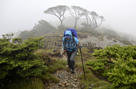 mid adult woman hiking through kahurangi
