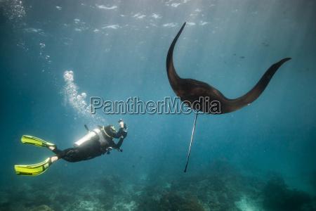 frau wissenschaft tier indonesien fisch sonnenlicht