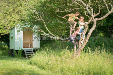 children climbing tree in grassy field