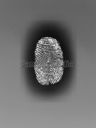 close up von fingerabdruck auf papier