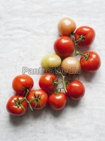 still life of fresh vine tomatoes