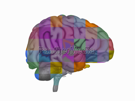 illustration of the human brain as