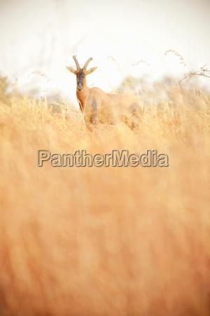 nationalpark afrika savanne outdoor freiluft freiluftaktivitaet