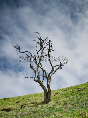 tree with no leaves on hillside