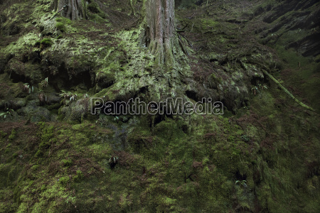 forest tree roots covered in green