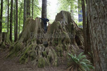 boy standing on tree stump redwoods