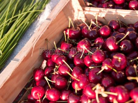 fresh cherries in a market in