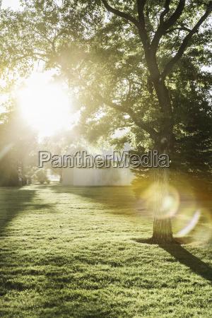 baum garten sonnenlicht outdoor freiluft freiluftaktivitaet