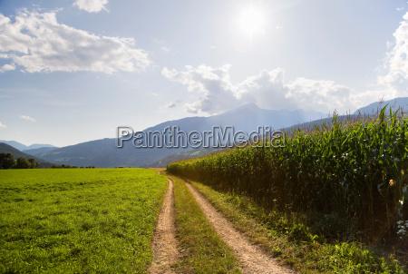 path along corn field on farm