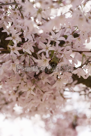 close up of flowering tree