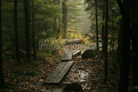 path through woods blue mountain lake