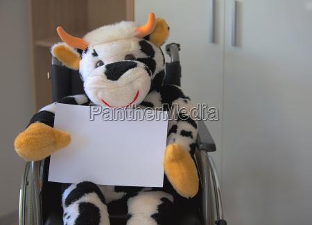plueschtier kuh sitzt im rollstuhl und