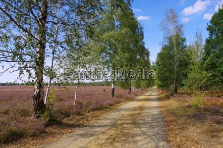 heidelandschaft im spaetsommer heath landscape
