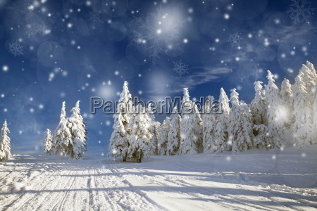collina vacanza vacanze inverno pino congelato