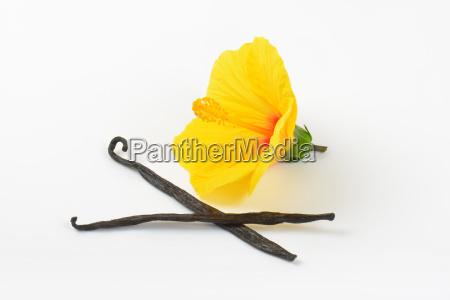 hibiscus flower and vanilla pods