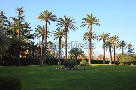 mediterranean palm garden