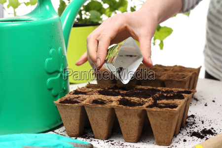 sowing plants at homepeat pot peat