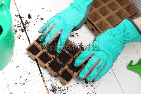 sowing of plants in the housepeat