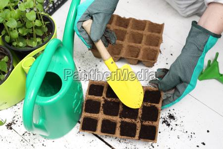 aussaat der pflanzen im haus torfpotentiometer