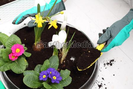 transplanting flowers planting plants floral composition